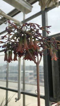 Hanging Flowers On A Stem